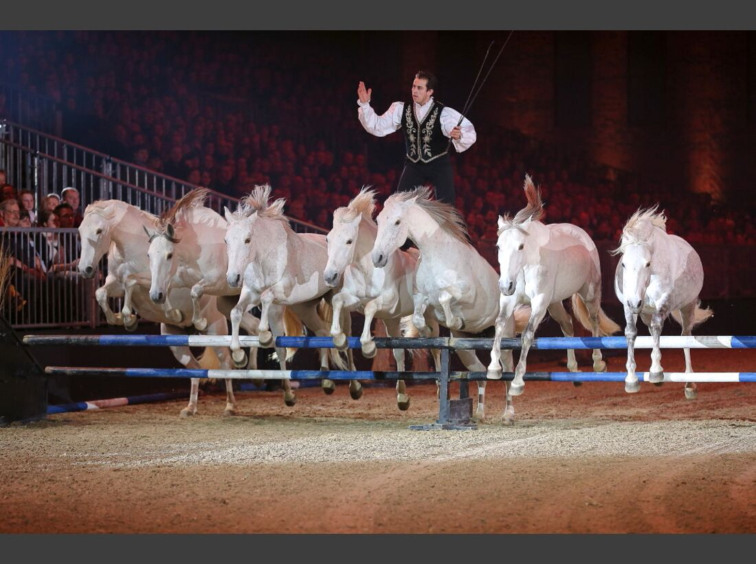 CAV Pferd und Jagd 9
