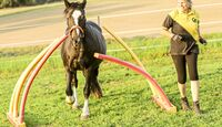 CAV Pferde-Agility  Nudelwald