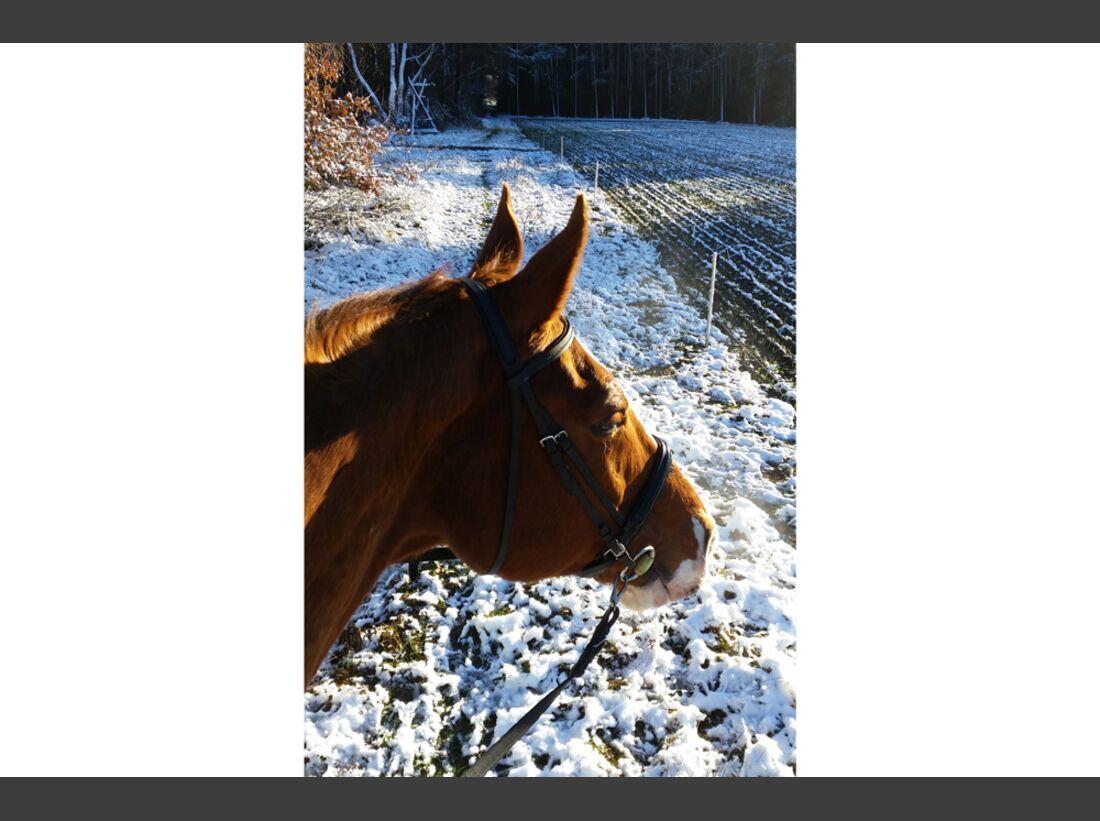 CAV Pferde Schnee Winter 2015 Anja Gardeleben