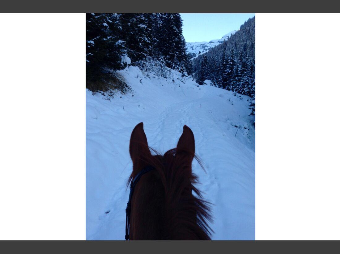 CAV Pferde Schnee Winter 2015 Samanta Schäfer
