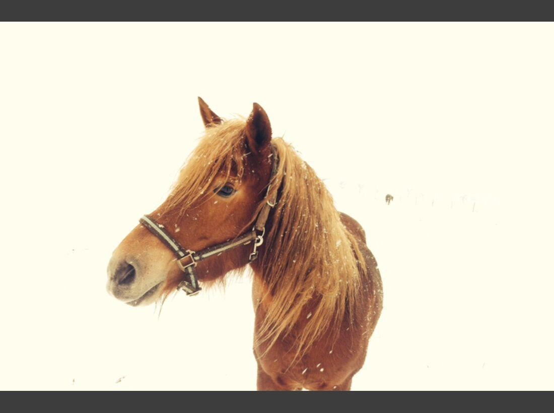 CAV Pferde Schnee Winter 2015 Senta Egger