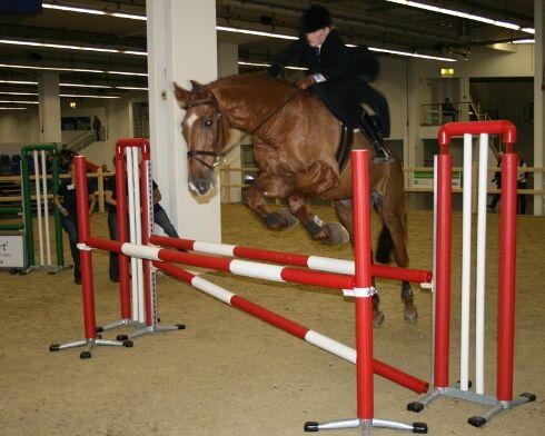 CAV Pferde Senioren Wallach Cayenne  MS