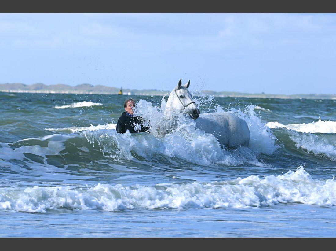 CAV-Pferde-beim-schwimmen-Anja-Jennessen (JPG)