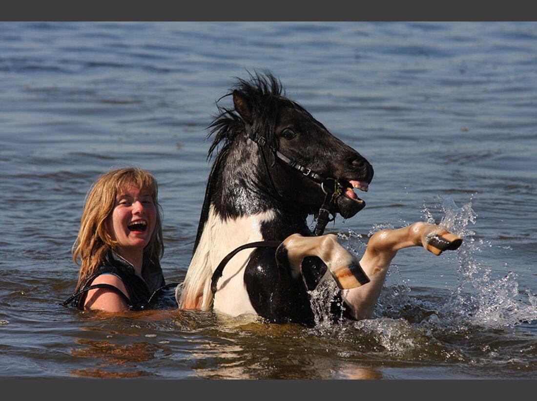 CAV-Pferde-beim-schwimmen-Martyna-Kosinska (jpg)