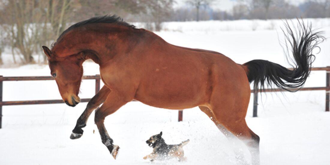 CAV Pferde im Schnee Winter 2