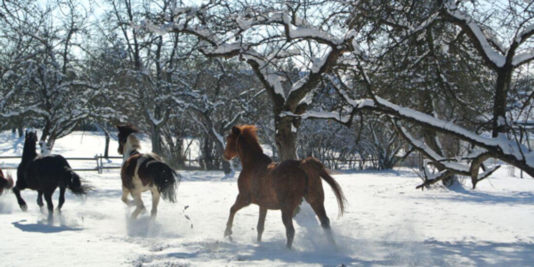 CAV Pferde im Schnee Winter 6