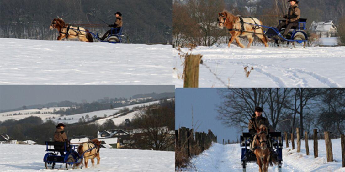 CAV Pferde im Schnee Winter - Marlon Schneeausfahrt