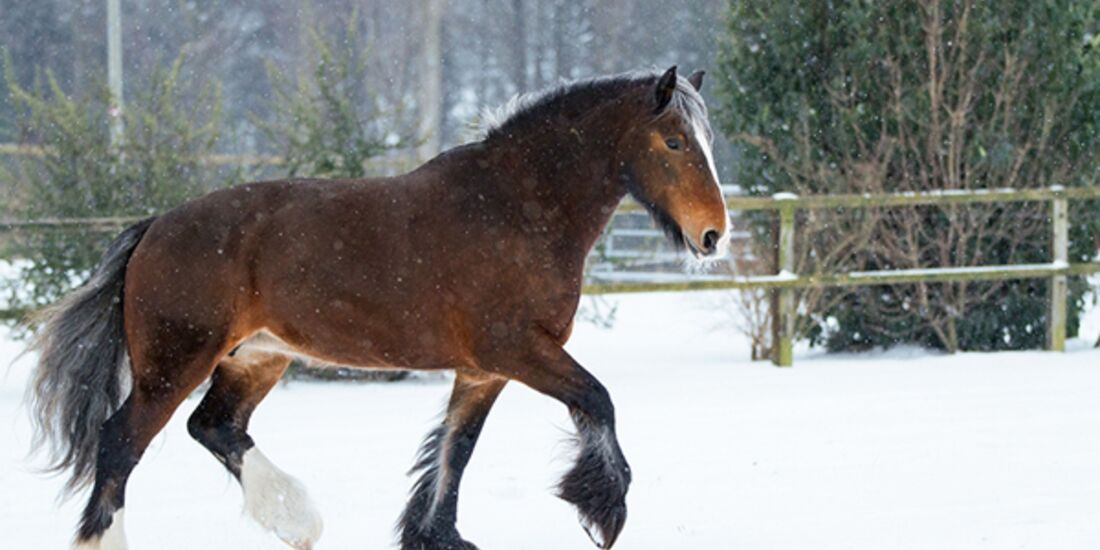 CAV Pferde im Schnee Winter - Mathilda
