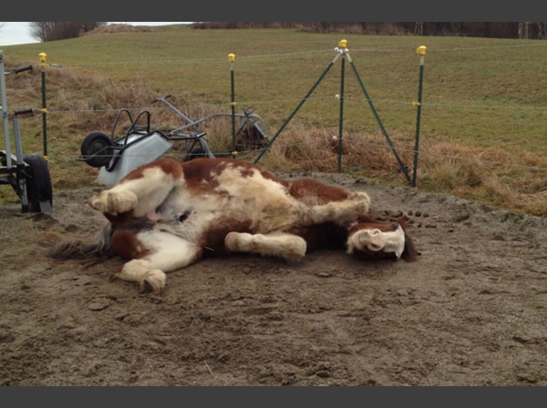 CAV Pferde wälzen 11