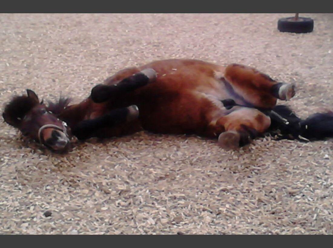 CAV Pferde wälzen 12