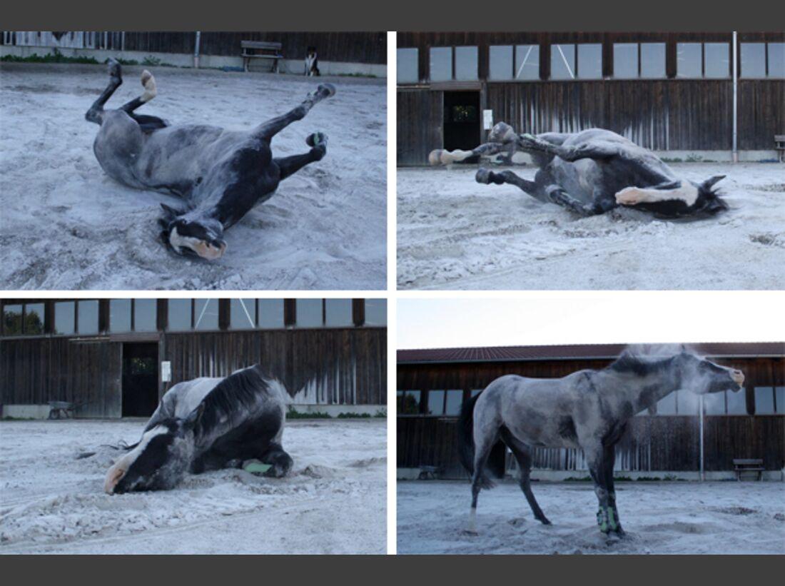 CAV Pferde wälzen 17