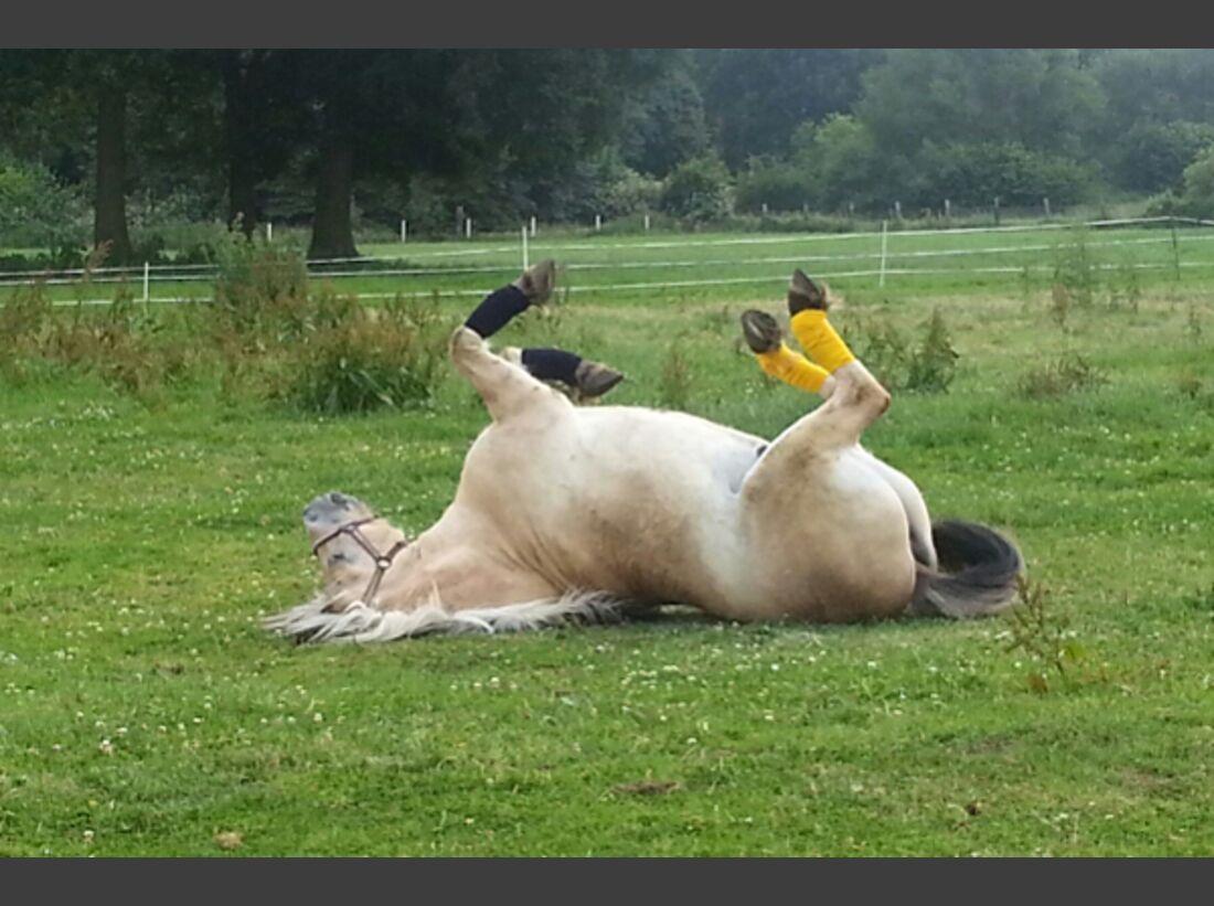 CAV Pferde wälzen 18