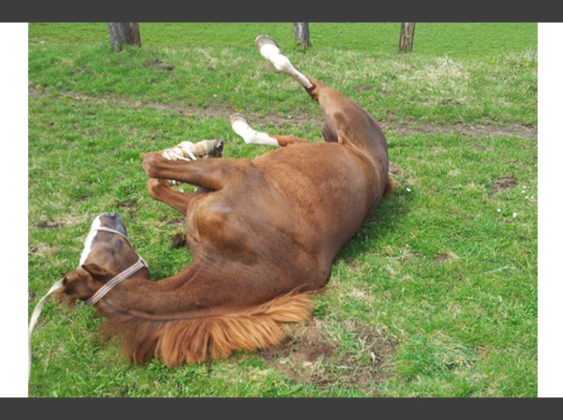 CAV Pferde wälzen Leserfotos 25