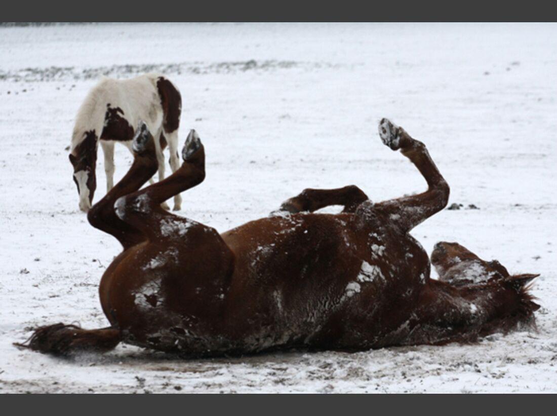 CAV Pferde wälzen Leserfotos 34