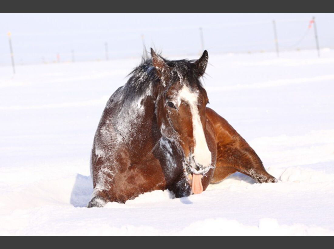 CAV Pferde wälzen Leserfotos 43