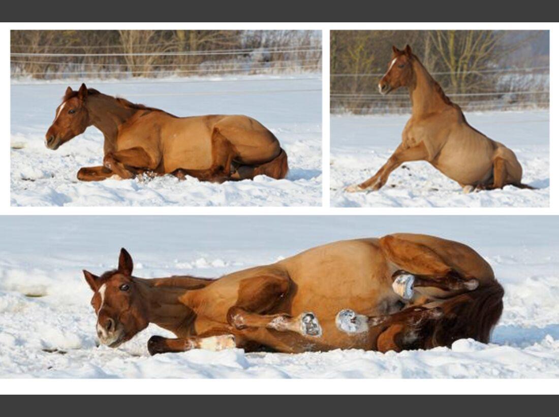 CAV Pferde wälzen Leserfotos 45