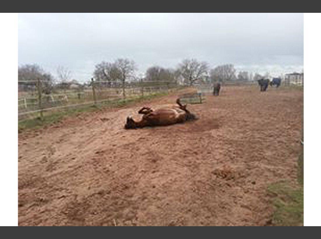 CAV Pferde wälzen Leserfotos 52