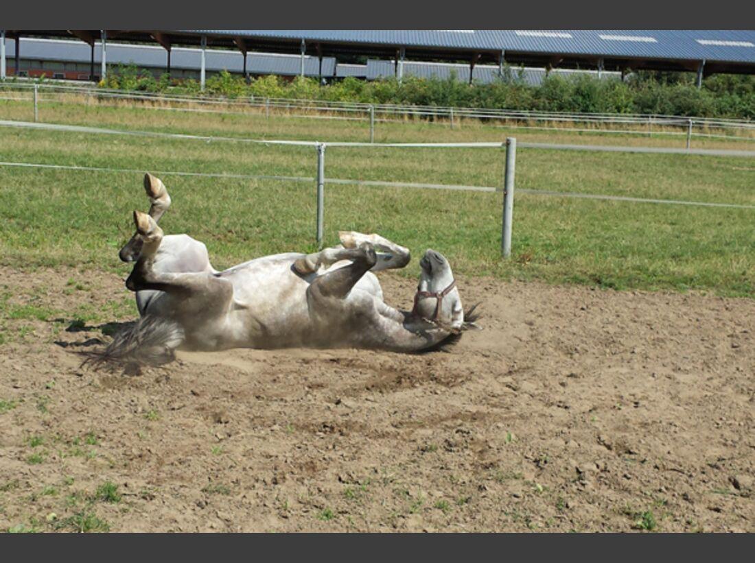 CAV Pferde wälzen Leserfotos 57
