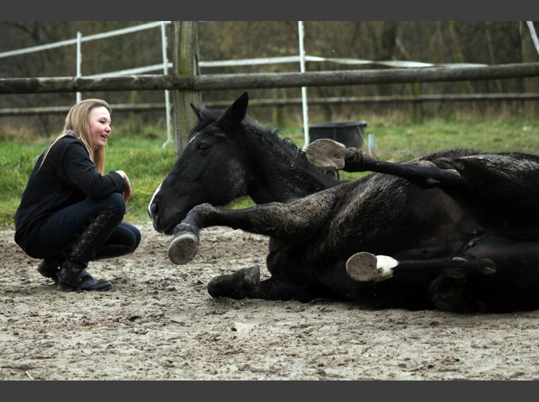 CAV Pferde wälzen Leserfotos Cerstin Meding
