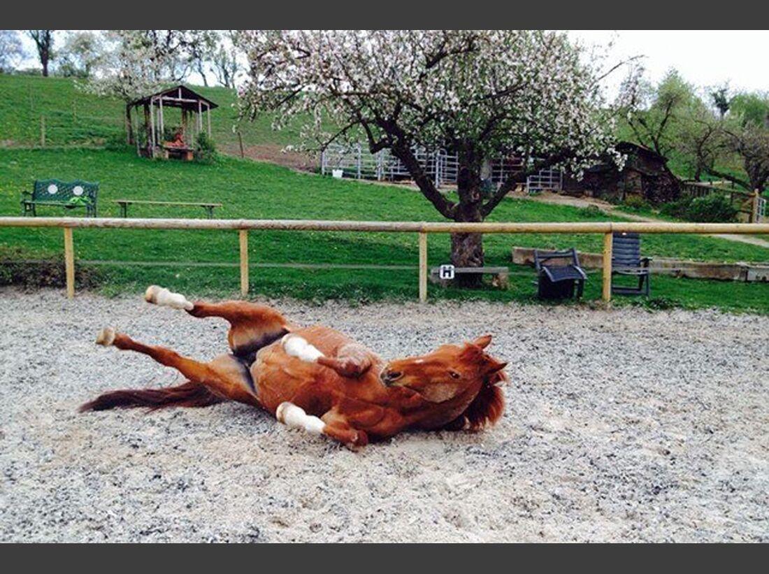 CAV-Pferde-wälzen-Leserfotos-Elfy-Krieg
