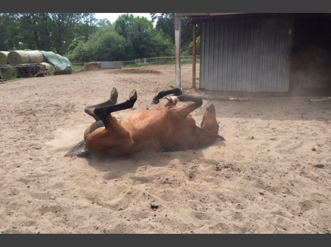 CAV Pferde wälzen Leserfotos Gabriele Preuss
