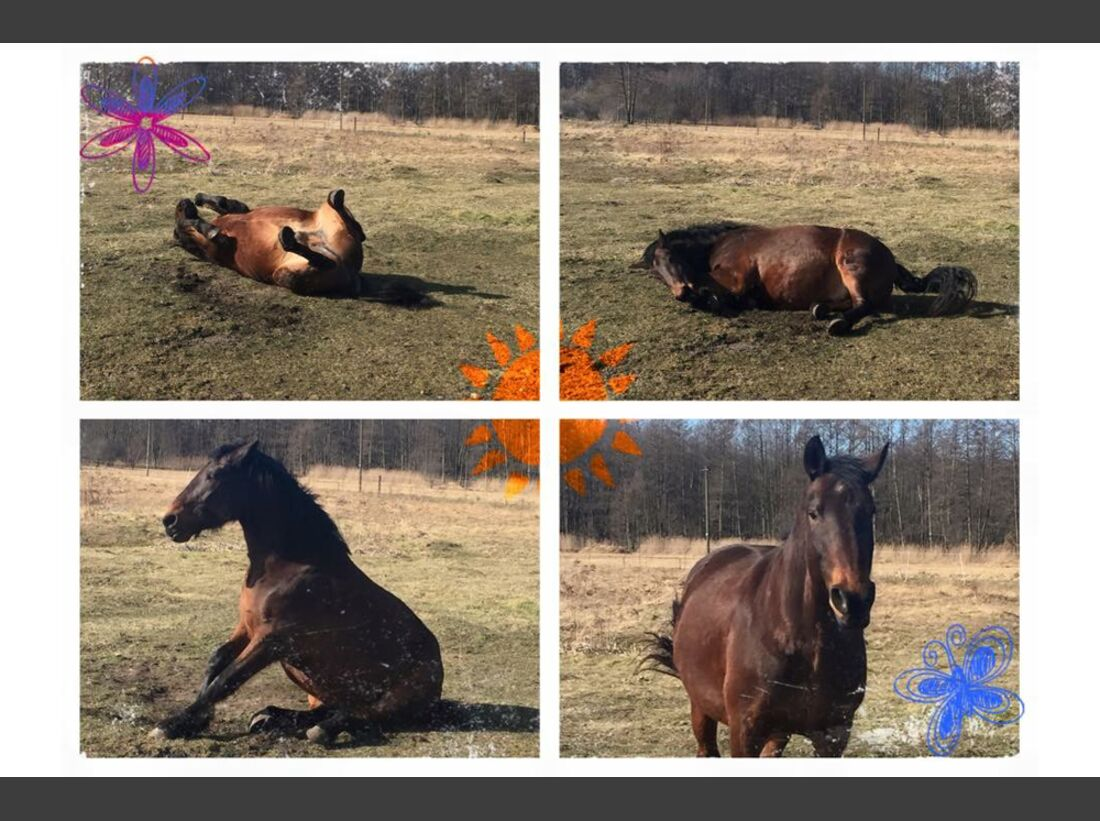 CAV Pferde wälzen Leserfotos Mandy Petzold