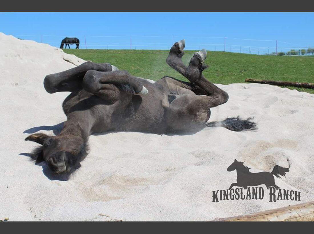 CAV Pferde wälzen Sarah Kreuter