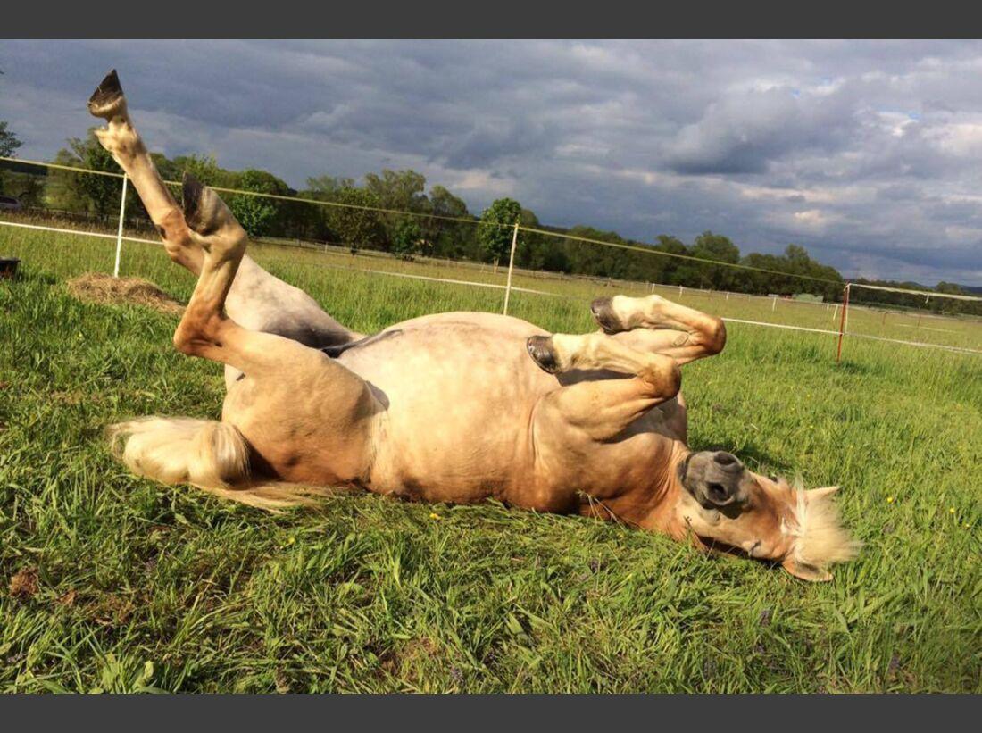 CAV Pferde wälzen Vivian Haase