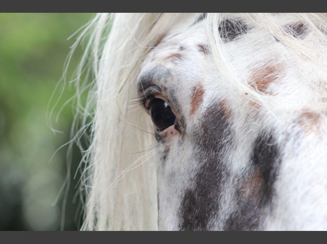 CAV Pferdeaugen Augen MS _16