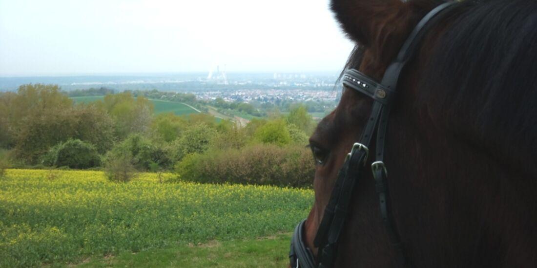 CAV Pferdeaugen Augen MS _27