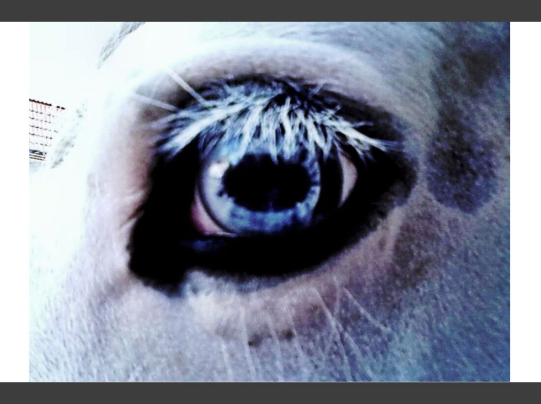 CAV Pferdeaugen Augen MS Angela Hoffmann