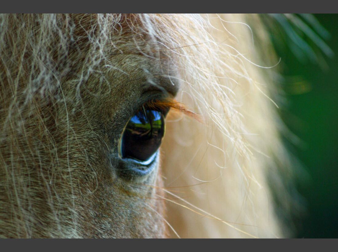 CAV Pferdeaugen Augen Marlon