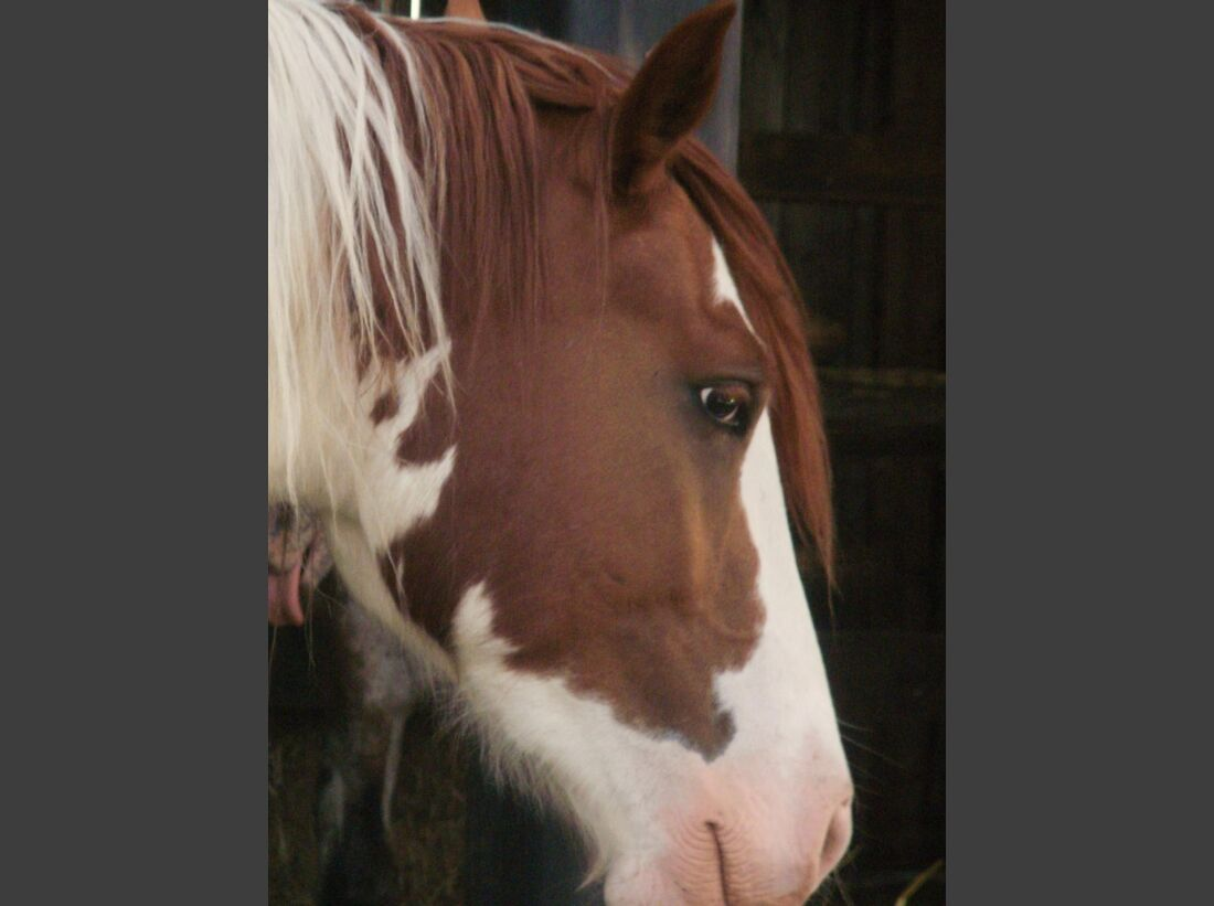 CAV Pferdeaugen Augen Paint MS _06