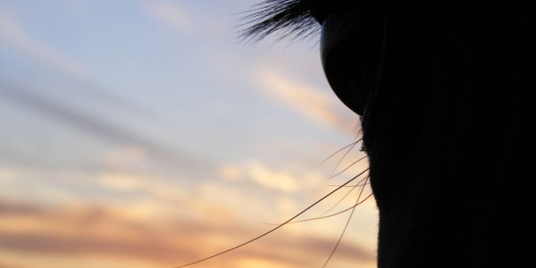 CAV Pferdeaugen Augen Paint MS _09