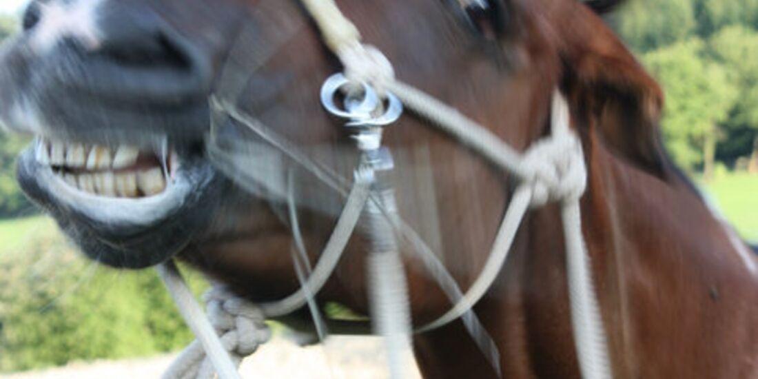 CAV Pferdefotos Kopf Fliegen