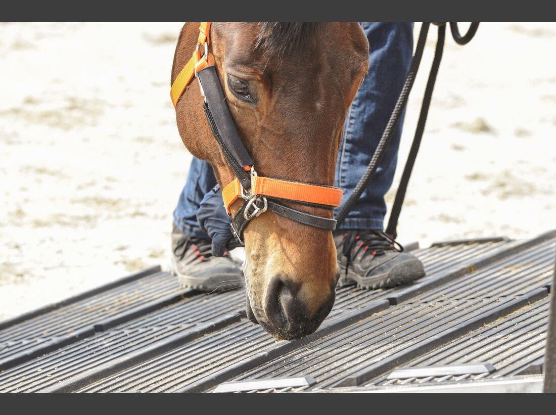 CAV Pferdehänger Pferd verladen 9