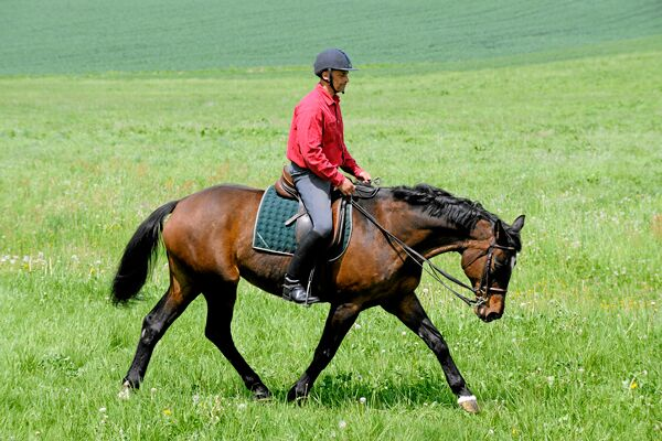 CAV Pferdekenner Knut Krüger Training Verhalten 2