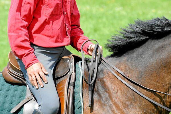CAV Pferdekenner Knut Krüger Training Verhalten 3