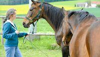 CAV Pferdekenner Knut Krüger Training Verhalten 8