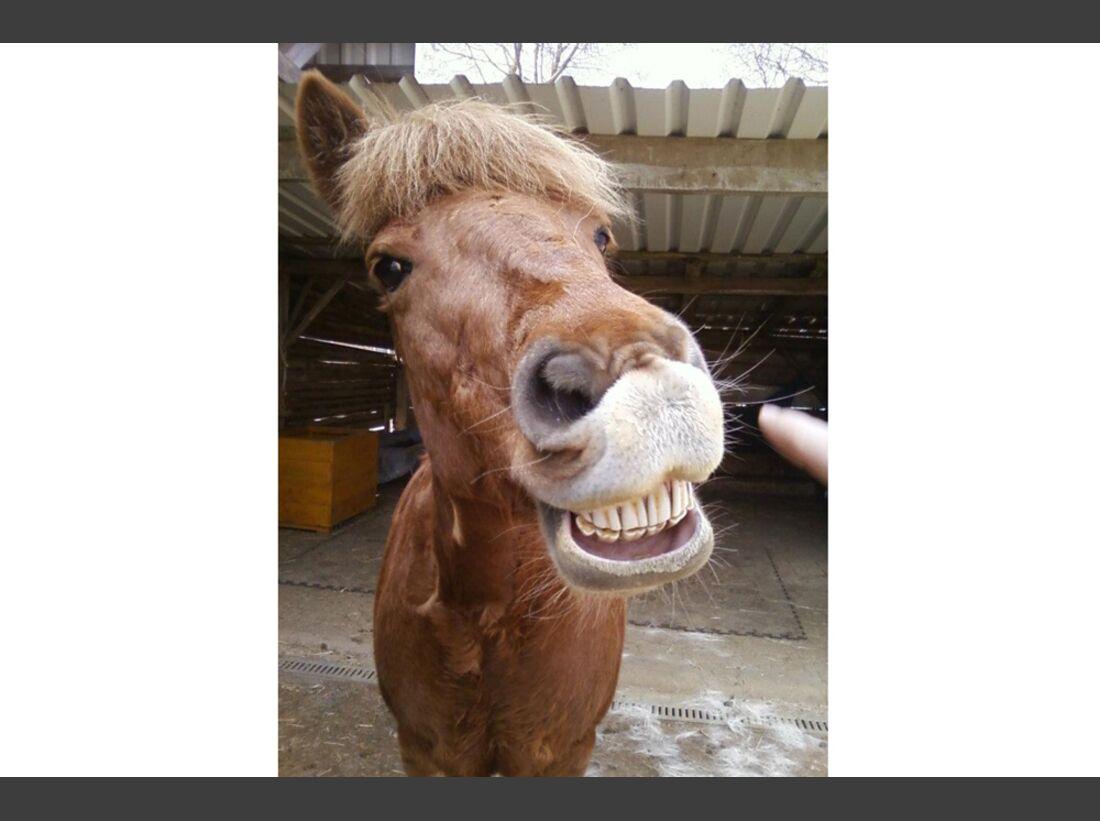 CAV Pferdenasen Nüstern Nase Leserfotos