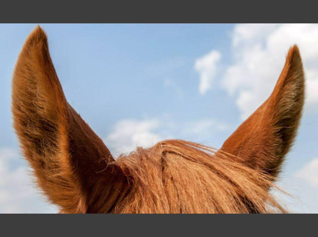 CAV-Pferdeohren-Chris-Neumann