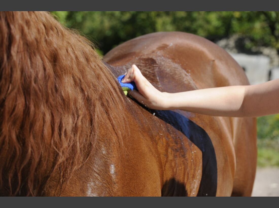 CAV Pferdepflege Pflege Putzen