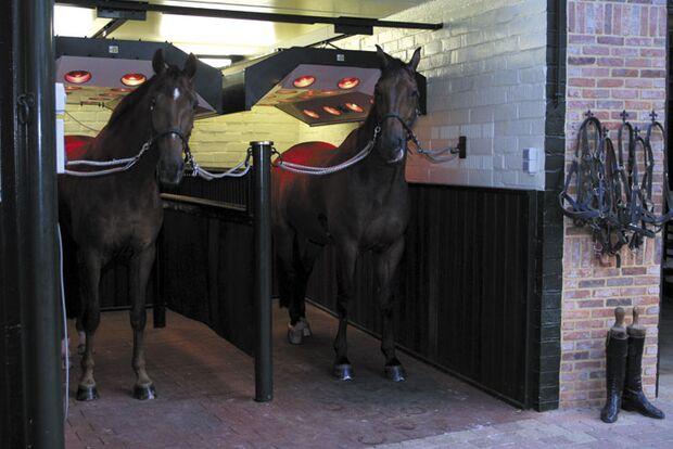 CAV Pferdesolarien - Pferde im Solarium