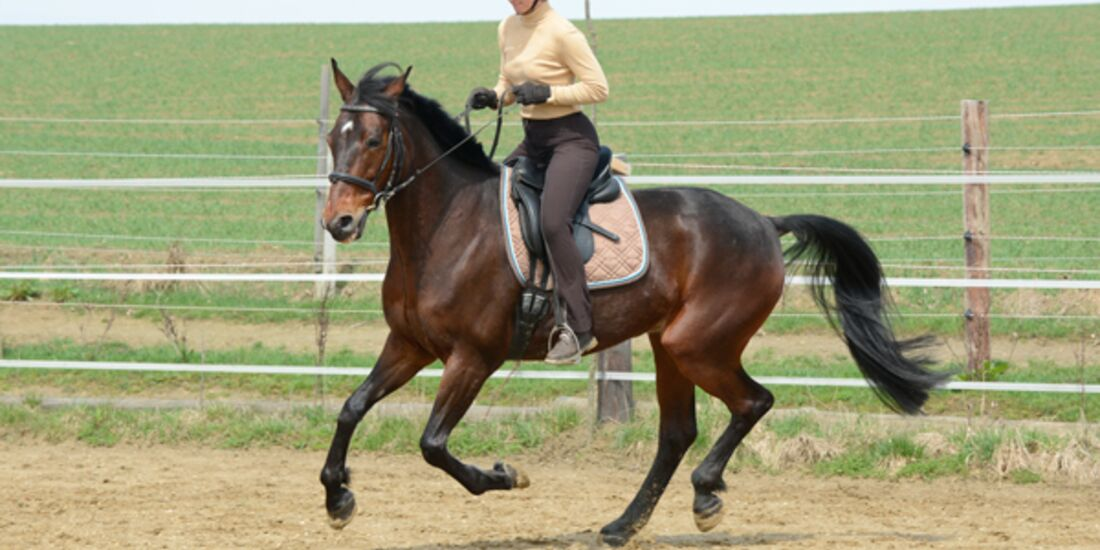 CAV Pferdetausch 3