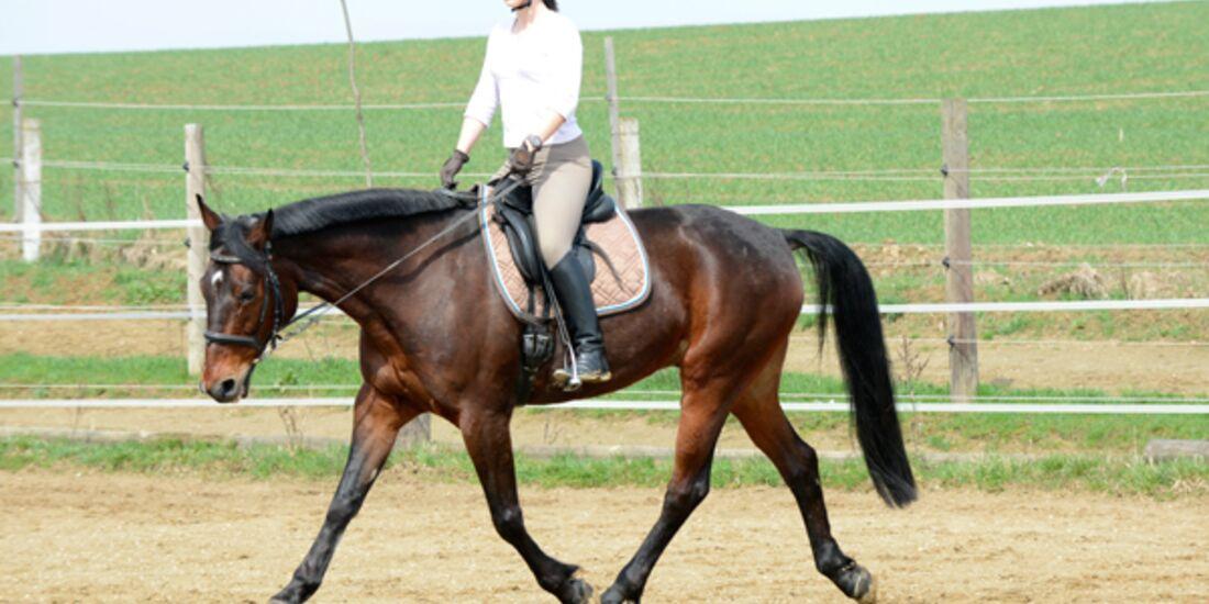 CAV Pferdetausch 7