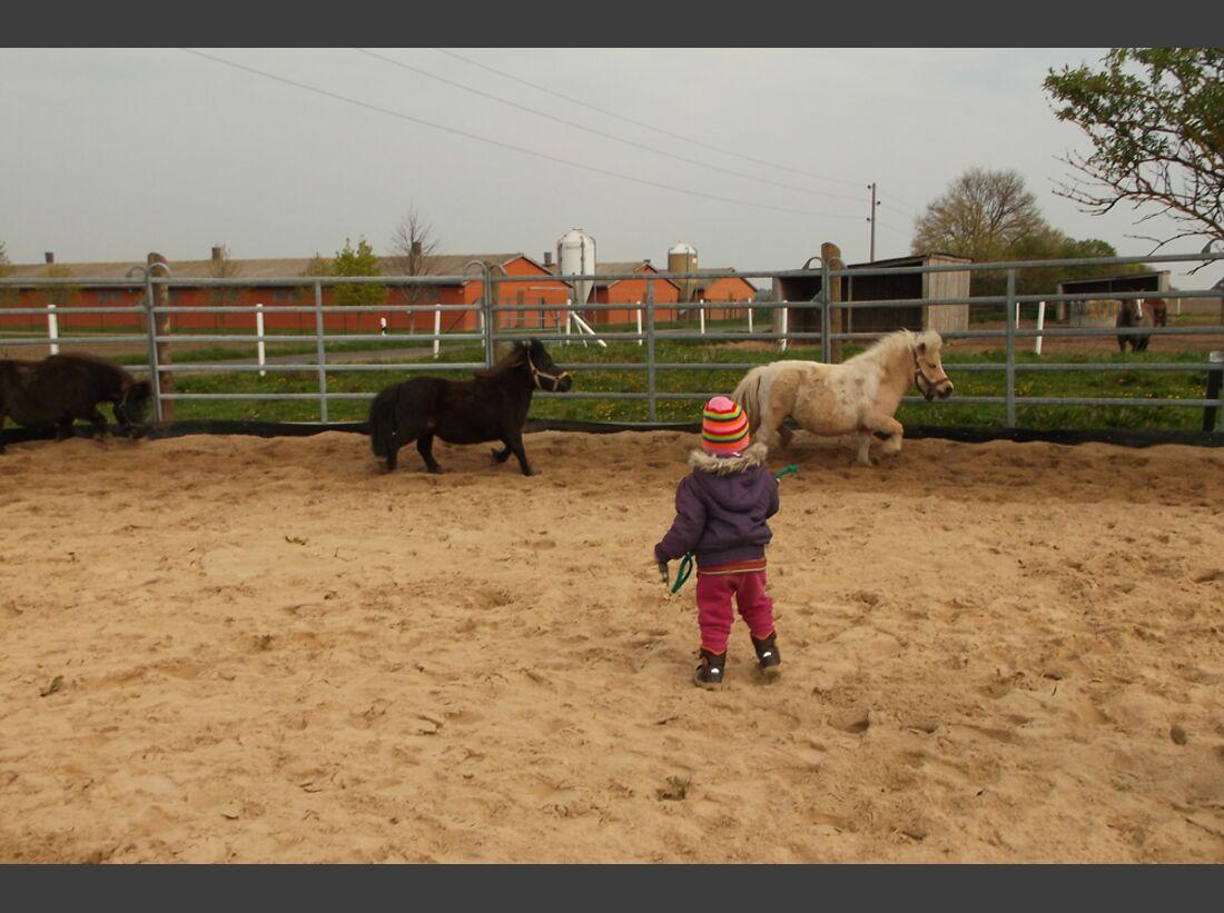 CAV Pony Angela Stelling