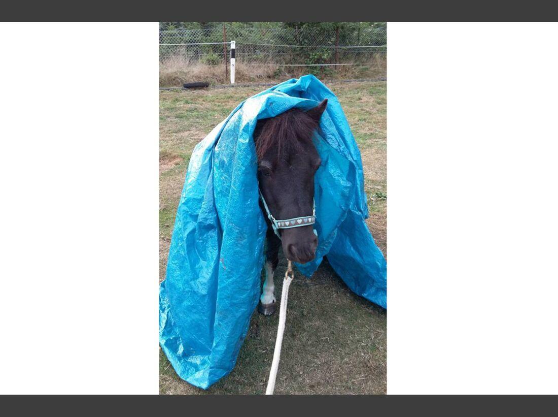 CAV Pony Henrike Hornbostel