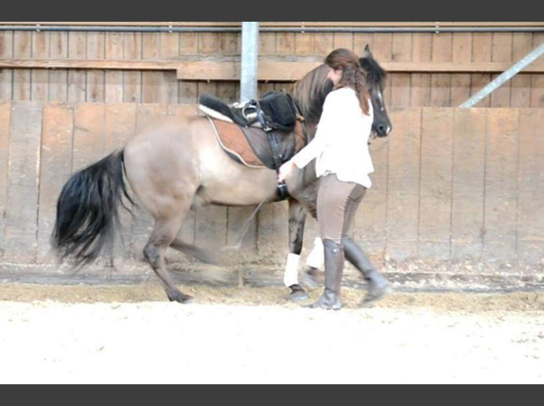 CAV Pony Leserfotos 11
