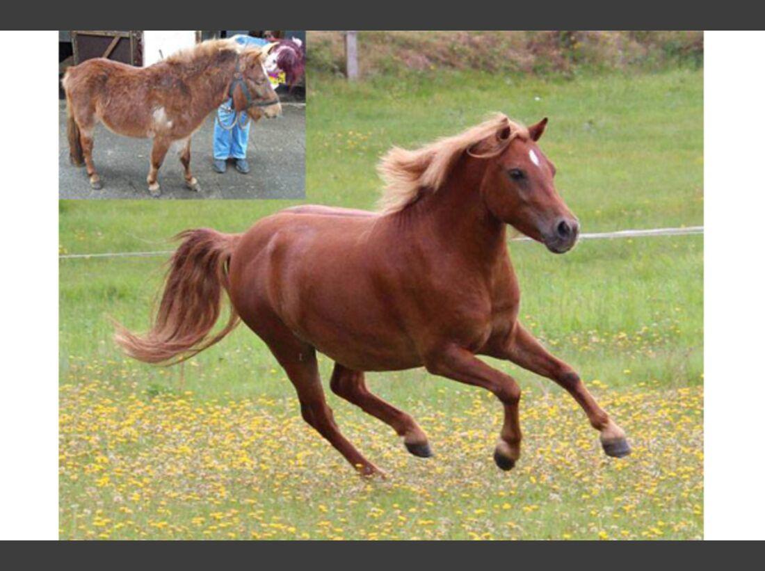 CAV Pony Leserfotos 13