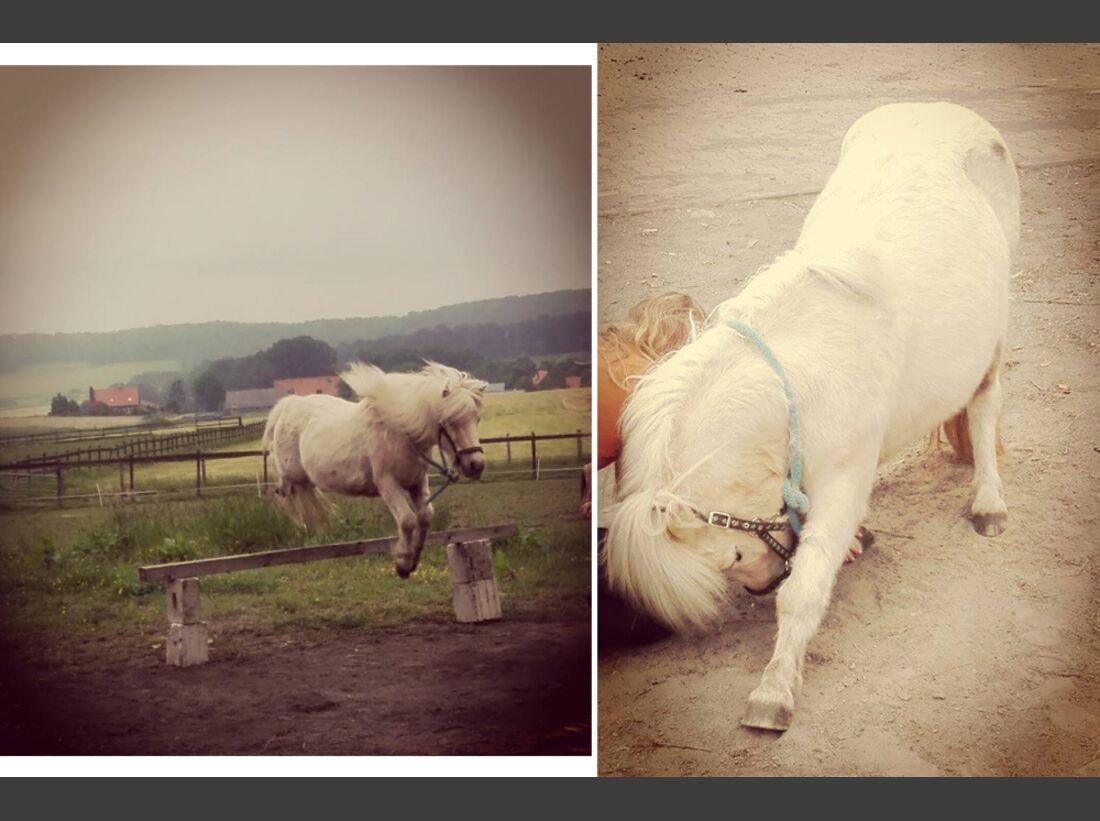 CAV Pony Sarah